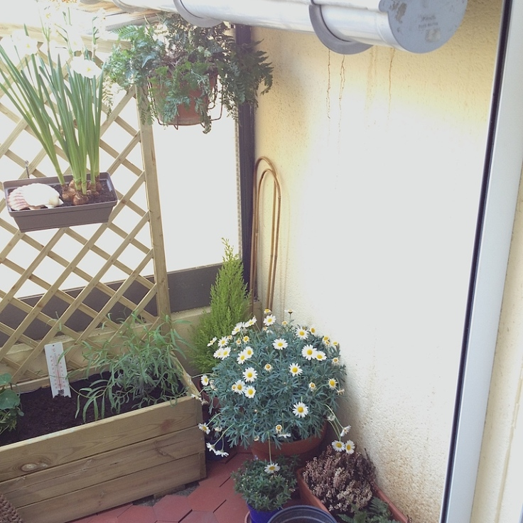 Mon balcon potager épisode 1 3
