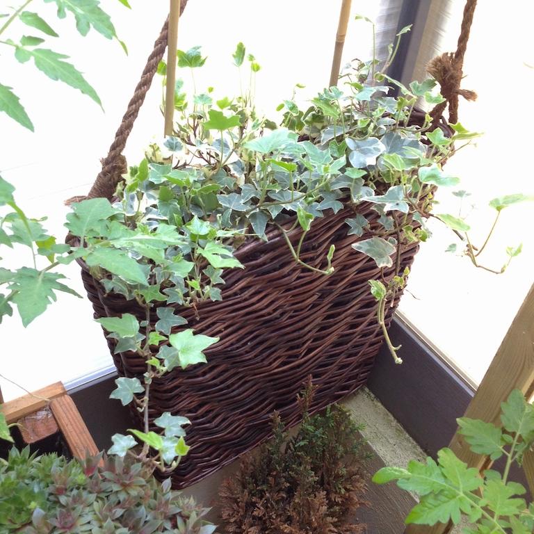 Mon balcon potager épisode 1 4
