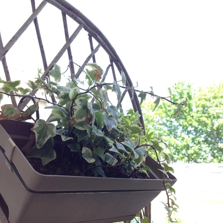 Mon balcon potager épisode 1 9