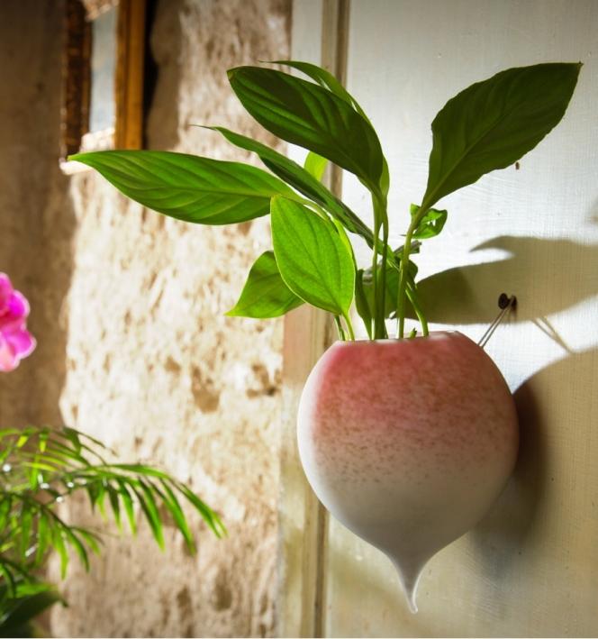 radis-a-planter