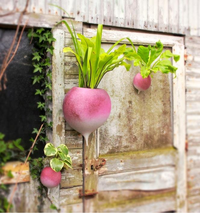 radis-geant-a-planter
