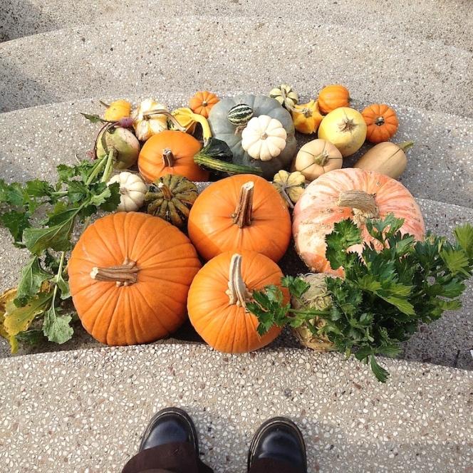 Cueillette d'automne 32