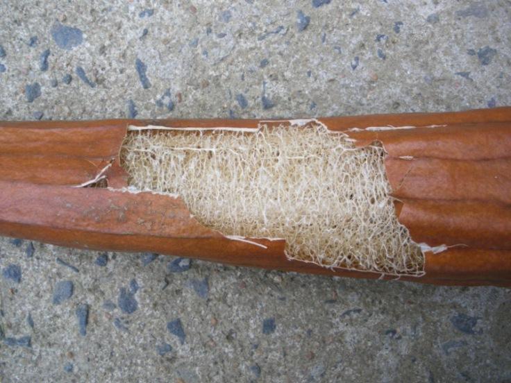 luffa from la boite à graine .com