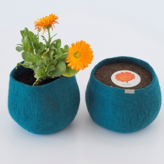 0000285_wool-pot-calendula_653