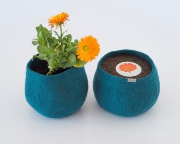 0000285_wool-pot-calendula_653