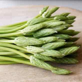 asperges-des-bois-1