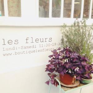 Fleurs séchées 11