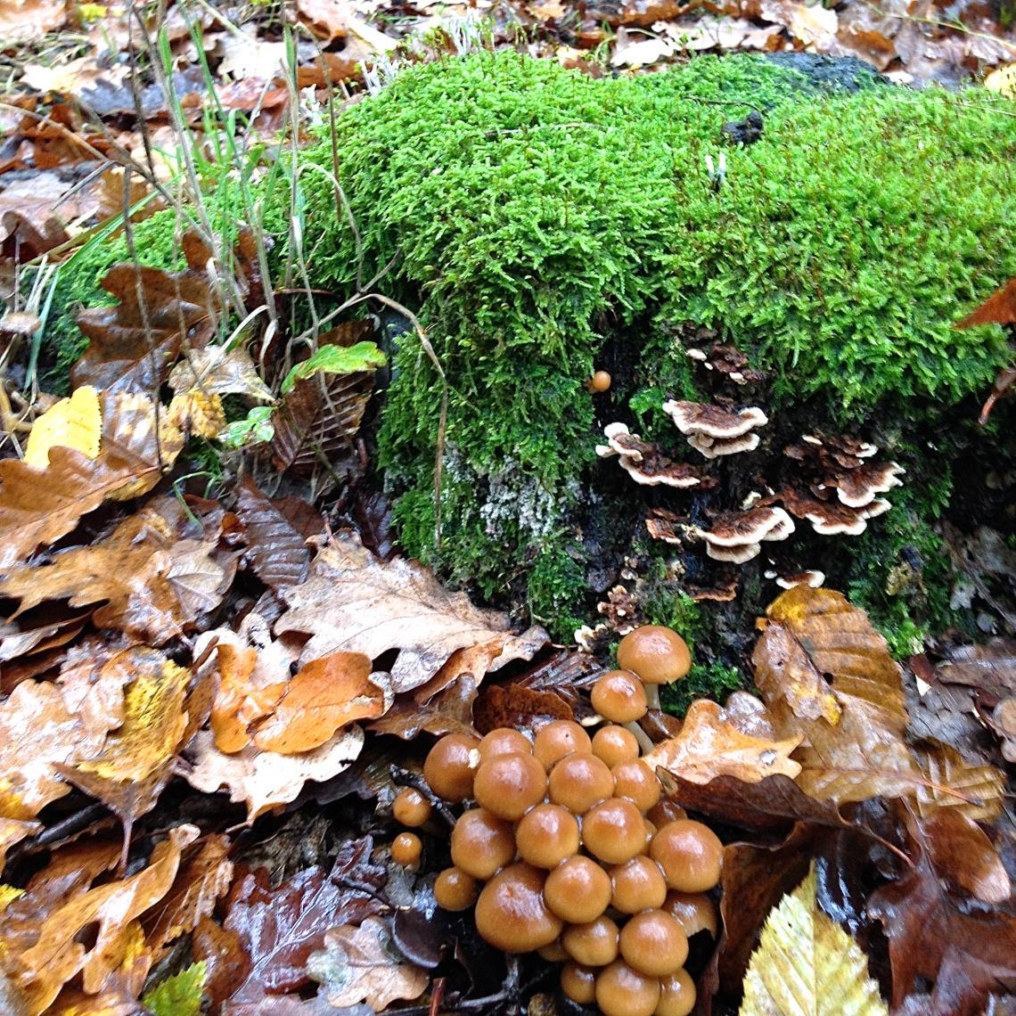 Cueillette sauvage champignon 13