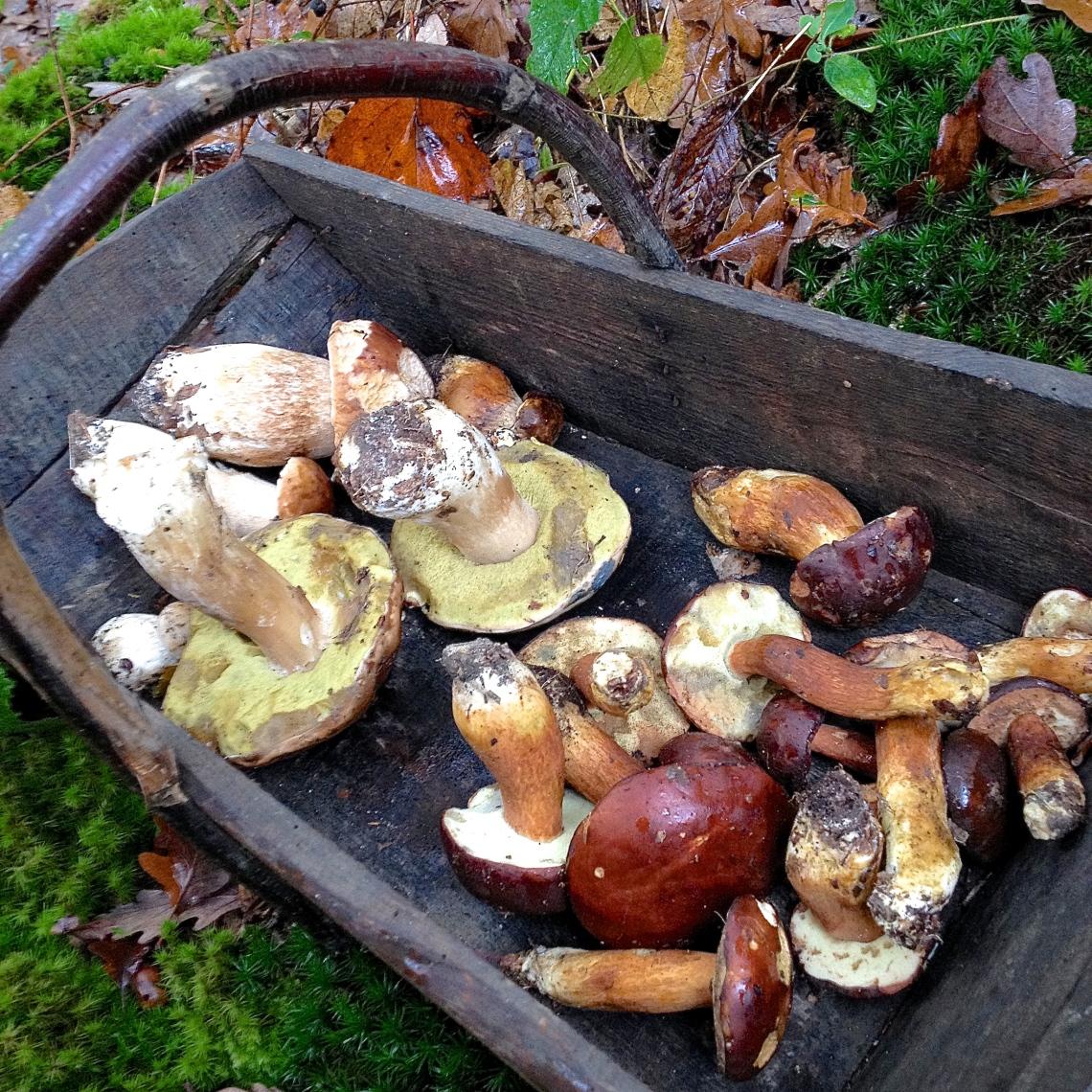 Cueillette sauvage champignon 23