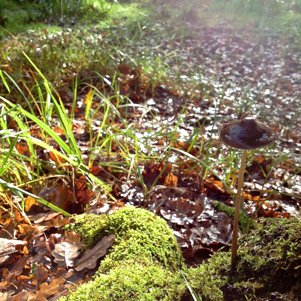 Cueillette sauvage champignon 27