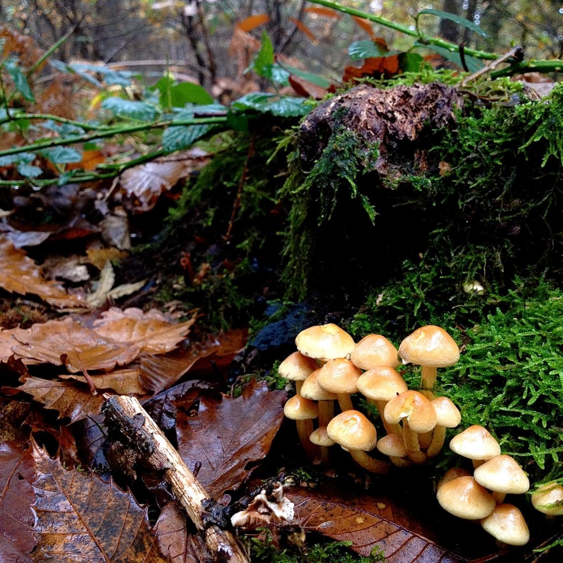 Cueillette sauvage champignon 39