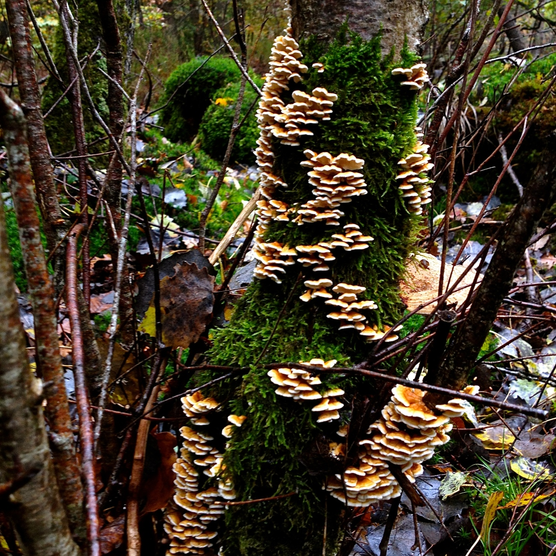 Cueillette sauvage champignon 40