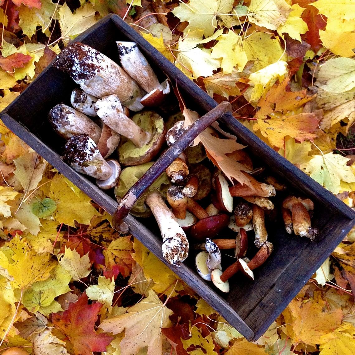 Cueillette sauvage champignon 48